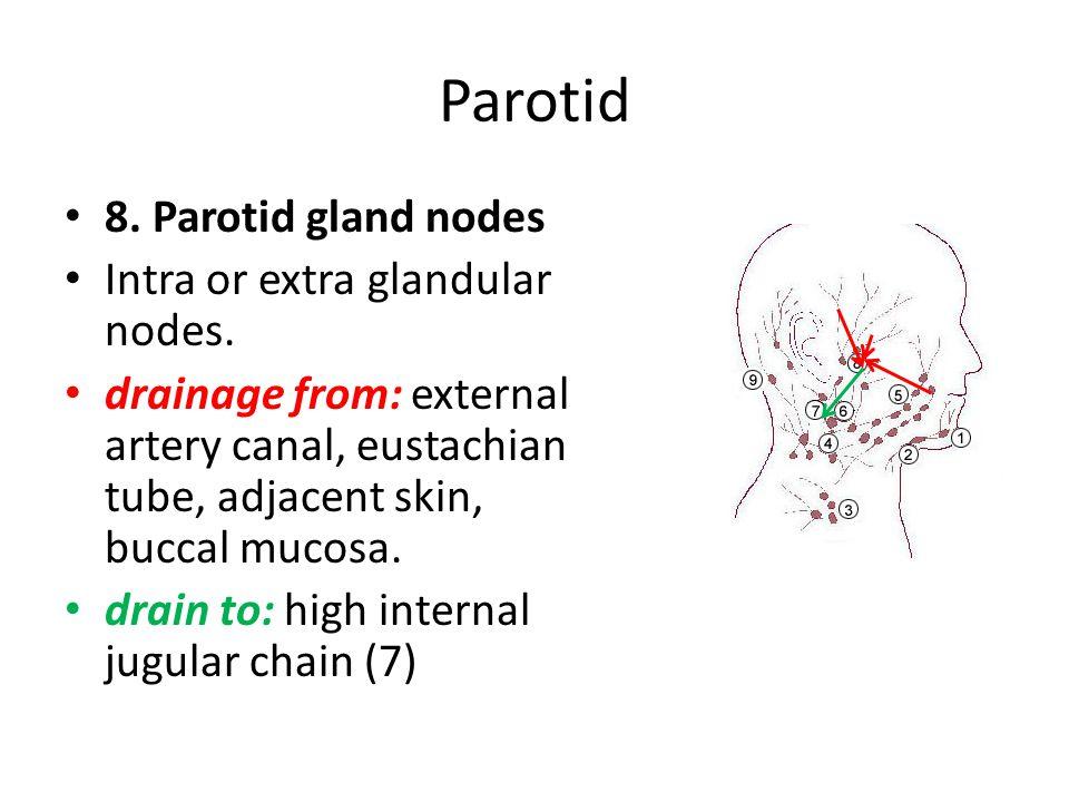 Parotid 8. Parotid gland nodes Intra or extra glandular nodes. drainage from: external artery canal, eustachian tube, adjacent skin, buccal mucosa. dr