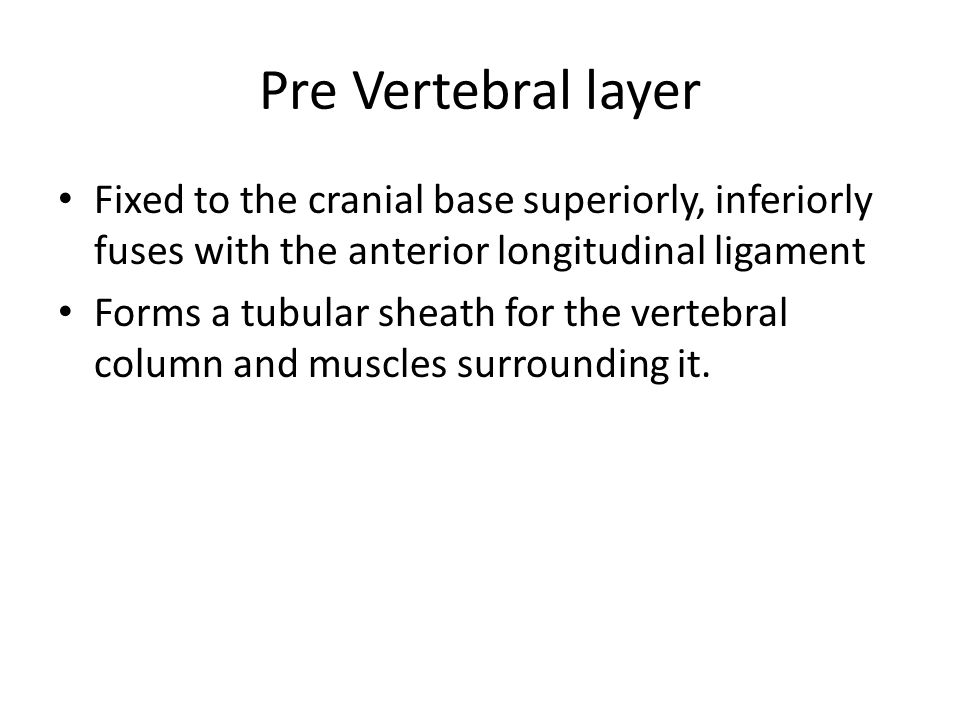 Pre Vertebral layer Fixed to the cranial base superiorly, inferiorly fuses with the anterior longitudinal ligament Forms a tubular sheath for the vert