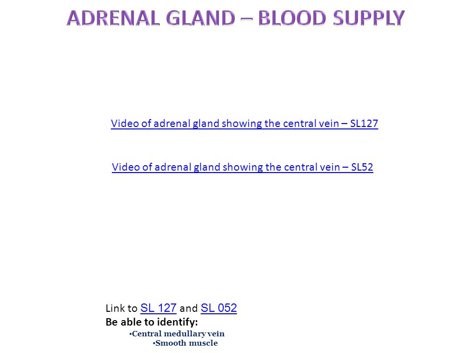 Video of adrenal gland showing the central vein – SL127 Link to SL 127 and SL 052 SL 127 SL 052 Be able to identify: Central medullary vein Smooth mus