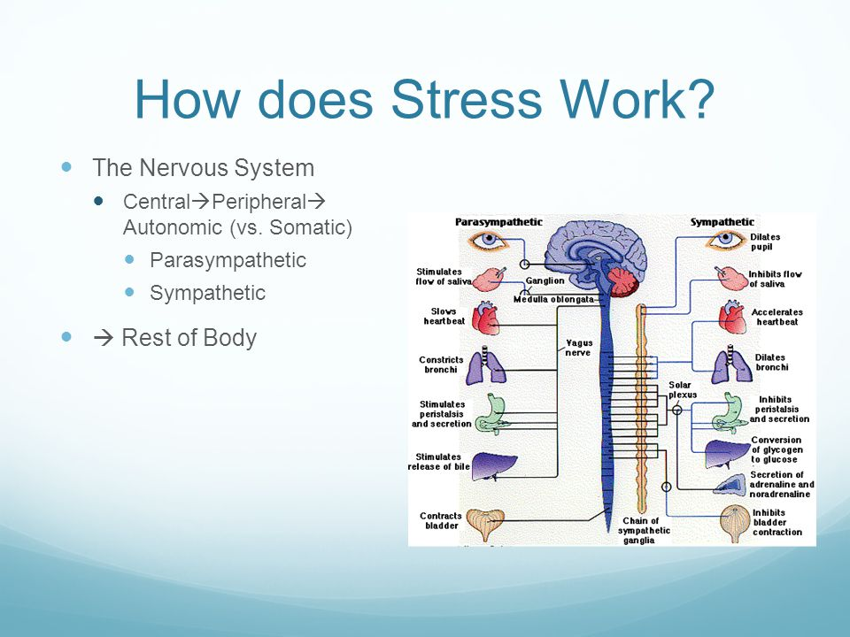 Issues From Stress -Biological: every major system -Psychological: Depression, Anxiety, etc.