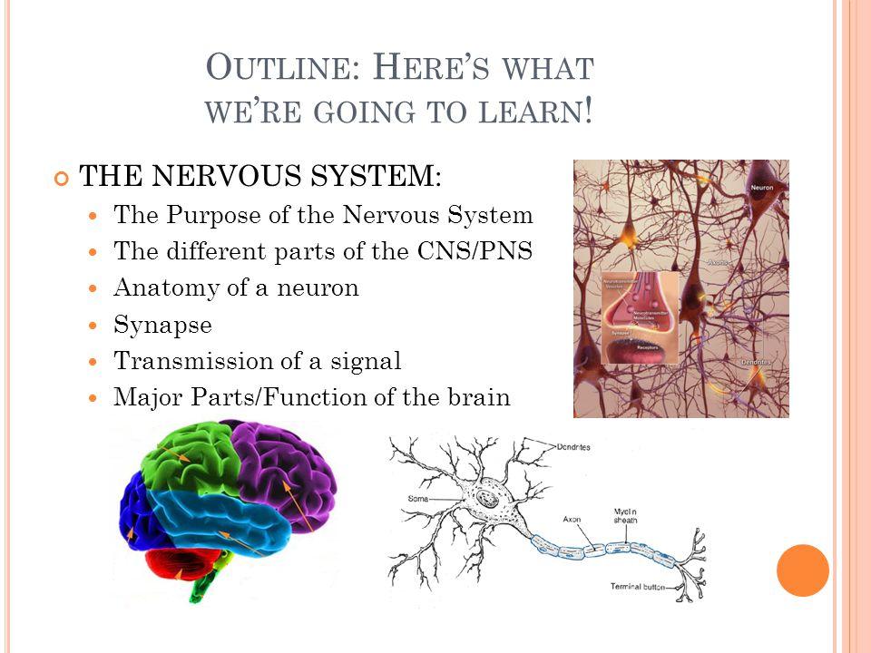S YNAPSE : S IGNALING JUNCTION Neurotransmitters: Acetylcholine Inhibitory Endorphin Dopamine Seratonin Excitatory Norepinephrine Epinephrine