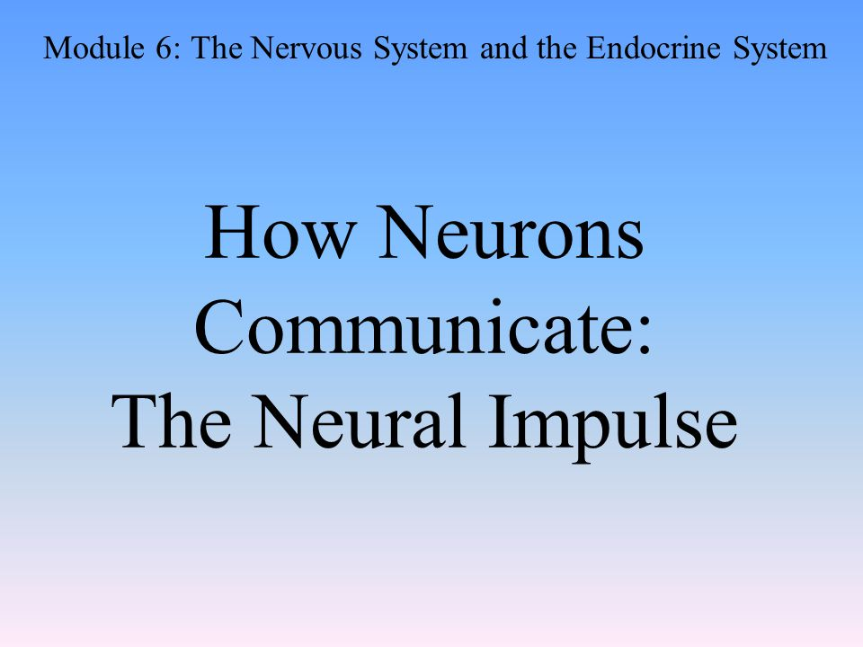 How Neurons Communicate: The Neural Impulse Module 6: The Nervous System and the Endocrine System