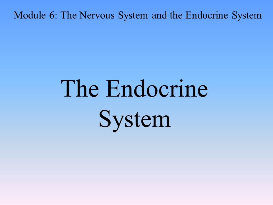 The Endocrine System Module 6: The Nervous System and the Endocrine System