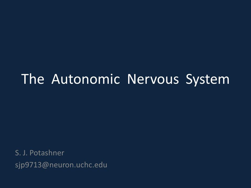 The Autonomic Nervous System S. J. Potashner sjp9713@neuron.uchc.edu
