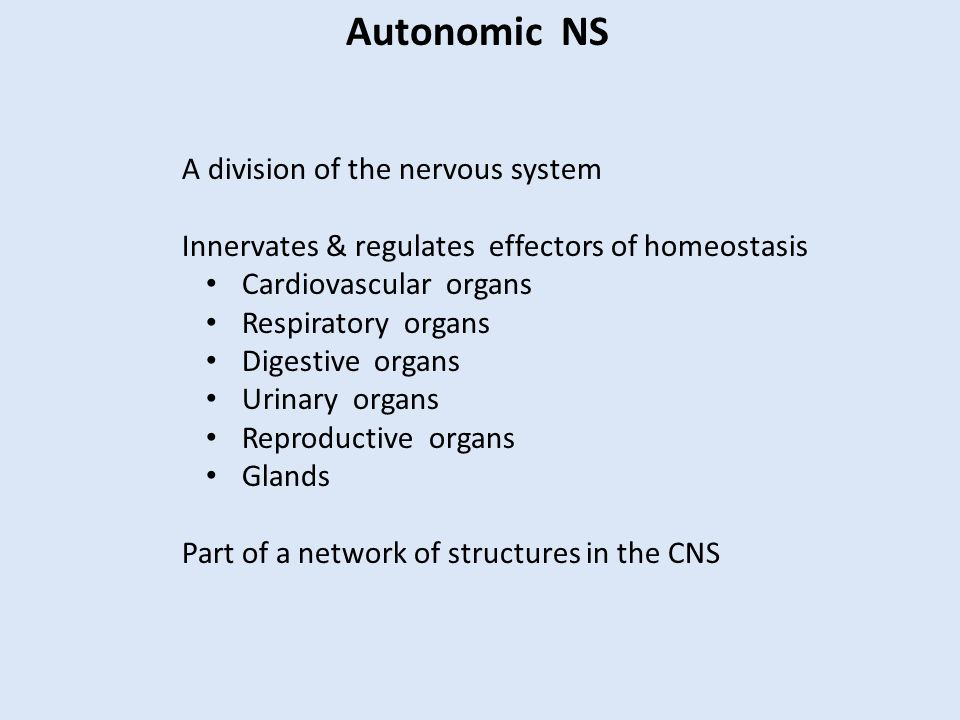 Autonomic NS A division of the nervous system Innervates & regulates effectors of homeostasis Cardiovascular organs Respiratory organs Digestive organs Urinary organs Reproductive organs Glands Part of a network of structures in the CNS