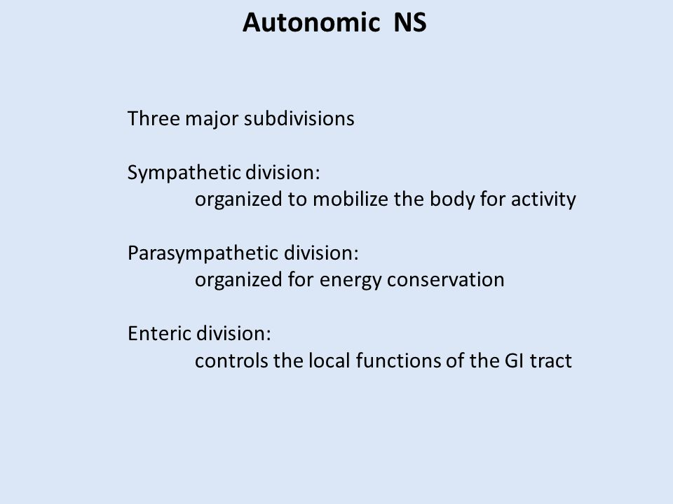 Autonomic NS Three major subdivisions Sympathetic division: organized to mobilize the body for activity Parasympathetic division: organized for energy conservation Enteric division: controls the local functions of the GI tract