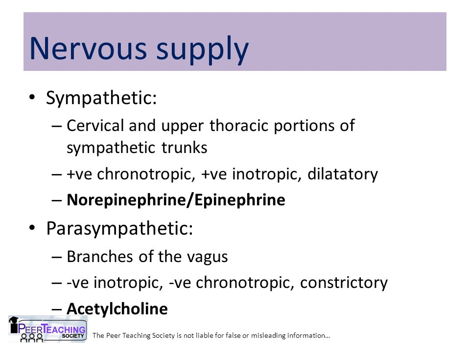 Sympathetic: – Cervical and upper thoracic portions of sympathetic trunks – +ve chronotropic, +ve inotropic, dilatatory – Norepinephrine/Epinephrine Parasympathetic: – Branches of the vagus – -ve inotropic, -ve chronotropic, constrictory – Acetylcholine The Peer Teaching Society is not liable for false or misleading information… Nervous supply