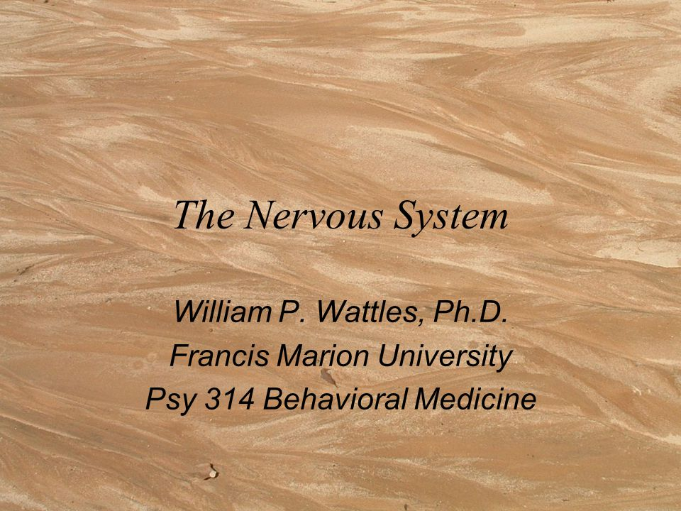 The Nervous System William P. Wattles, Ph.D. Francis Marion University Psy 314 Behavioral Medicine