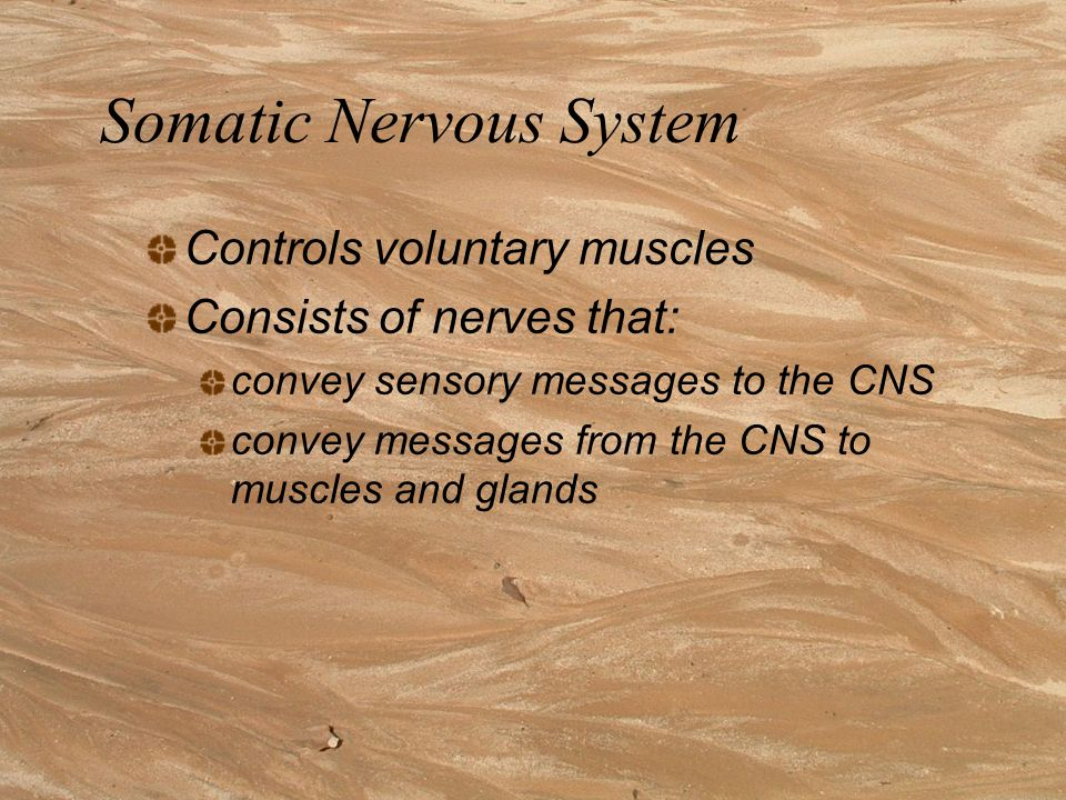 Subdivisions of the vertebrate nervous system (page 111) Central Nervous System Brain Spinal Cord Peripheral Nervous System Somatic nervous System Autonomic Nervous System Sympathetic division Parasympathetic division