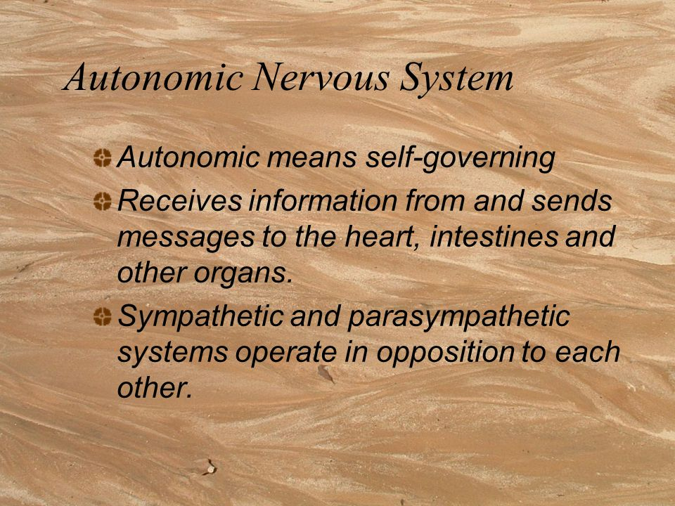 Somatic Nervous System Controls voluntary muscles Consists of nerves that: convey sensory messages to the CNS convey messages from the CNS to muscles and glands