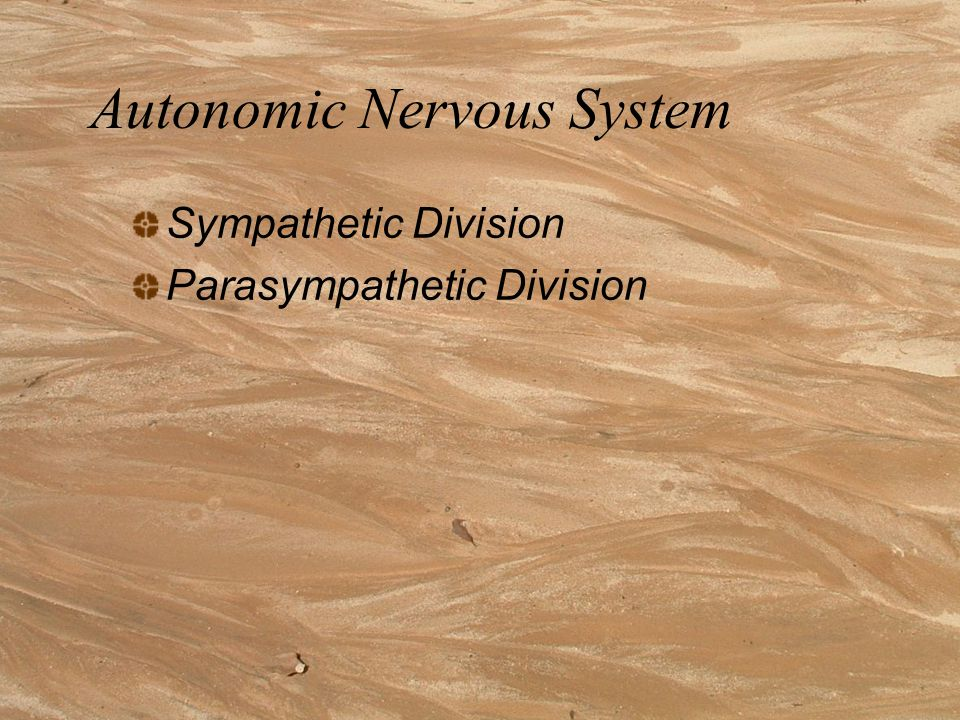 Autonomic Nervous System Autonomic means self-governing Receives information from and sends messages to the heart, intestines and other organs.