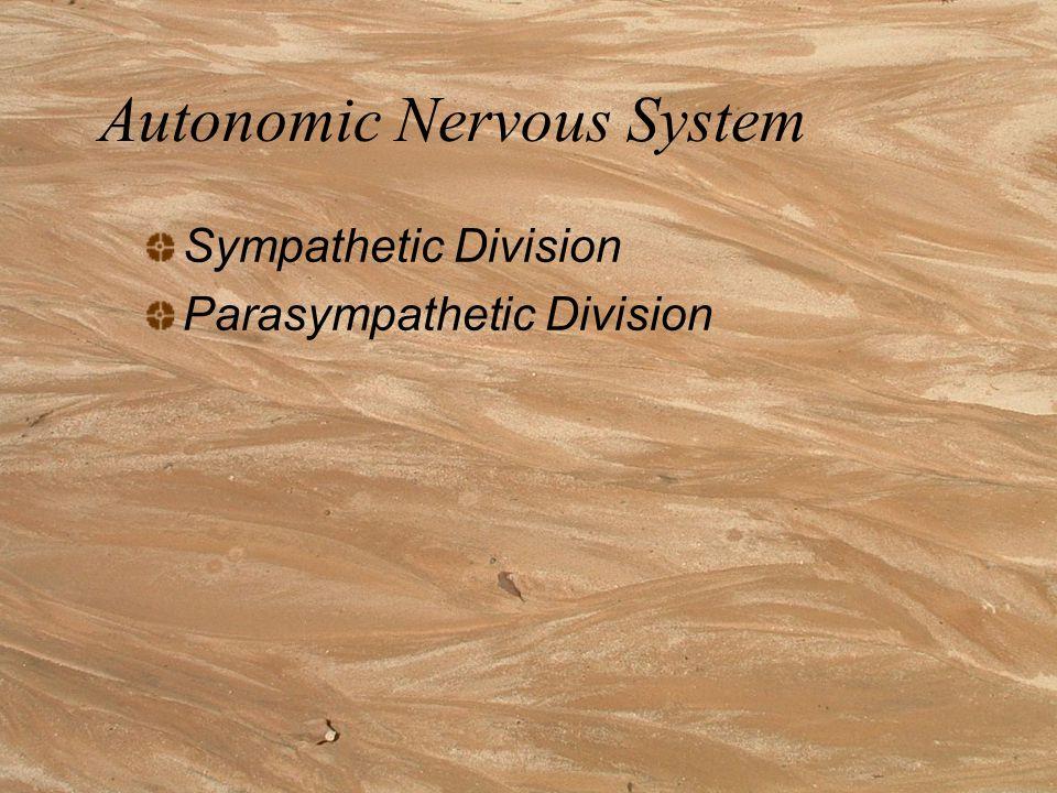 Autonomic Nervous System Sympathetic Division Parasympathetic Division