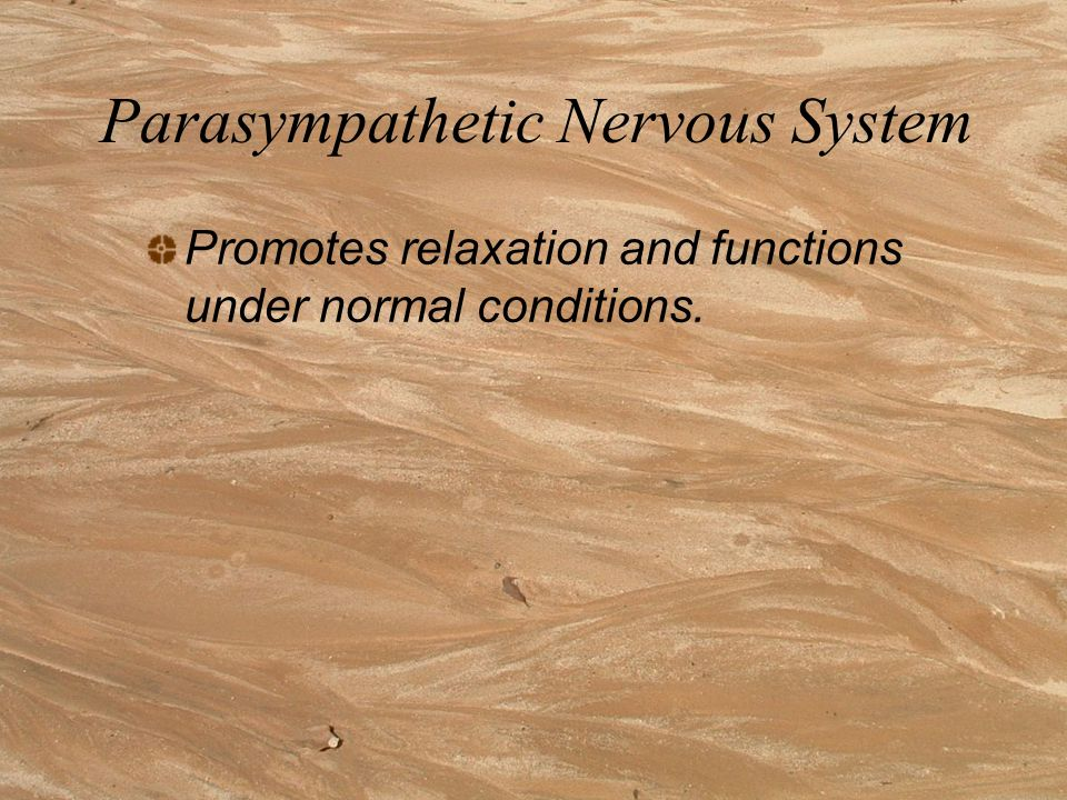 Parasympathetic Nervous System Promotes relaxation and functions under normal conditions.