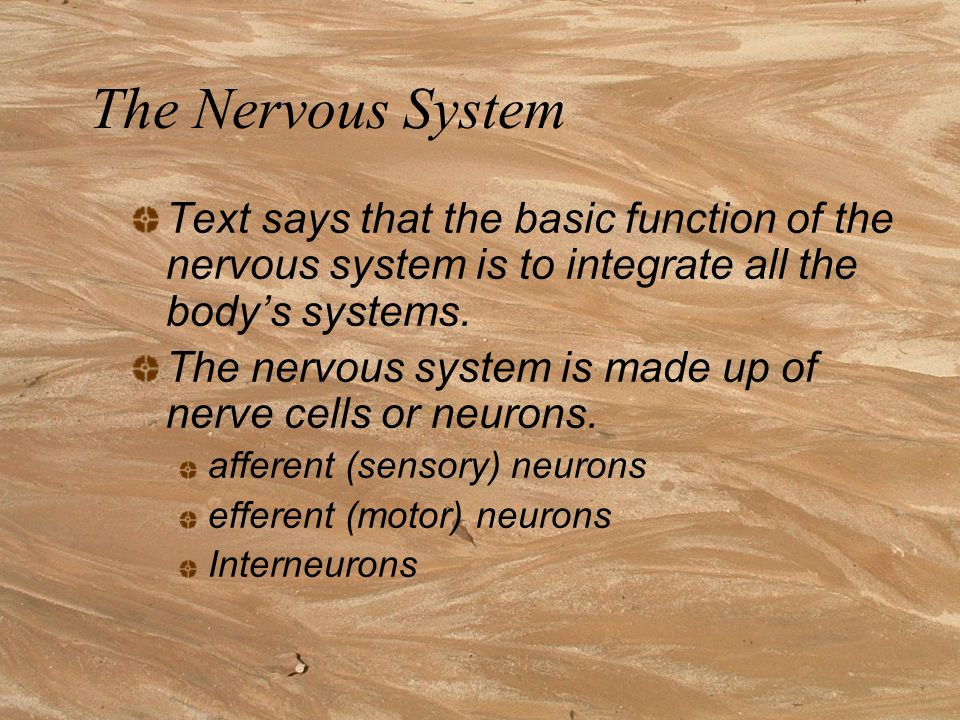 Sympathetic Nervous system If an animal is under threat, for whatever reason, its sympathetic nervous system is activated.