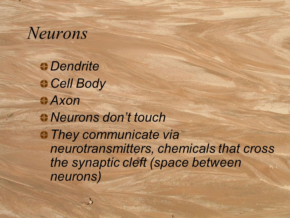 Neurons Dendrite Cell Body Axon Neurons don't touch They communicate via neurotransmitters, chemicals that cross the synaptic cleft (space between neurons)