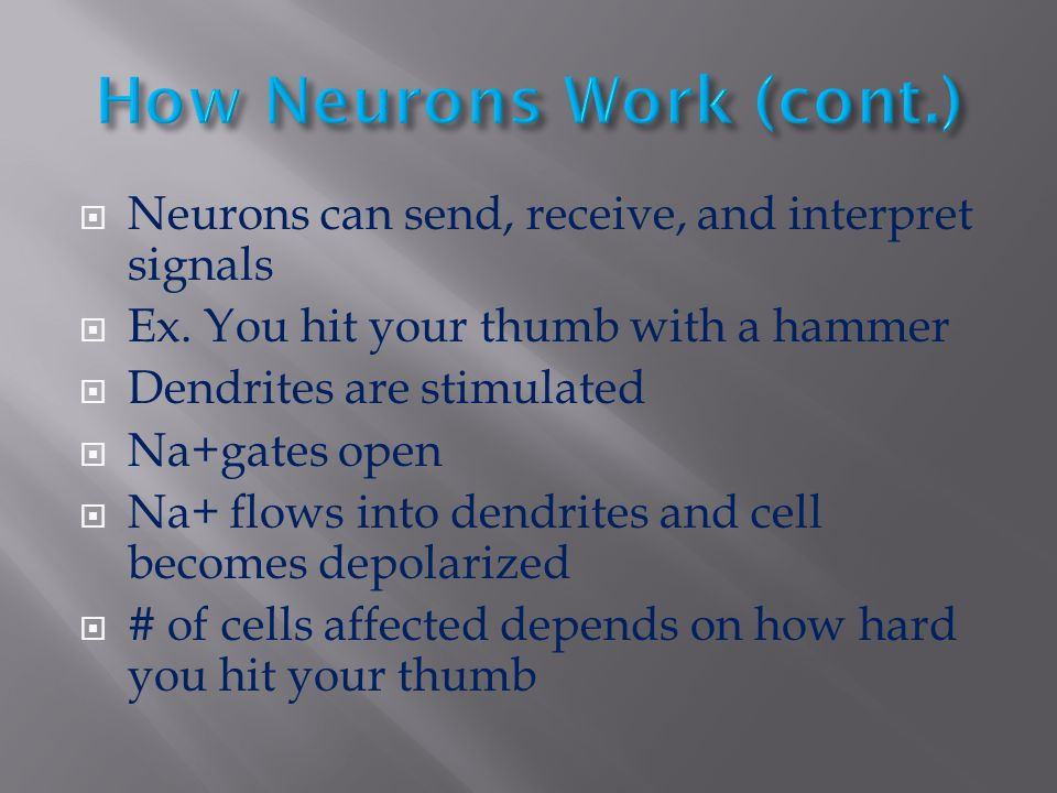 Neurons can send, receive, and interpret signals  Ex. You hit your thumb with a hammer  Dendrites are stimulated  Na+gates open  Na+ flows into