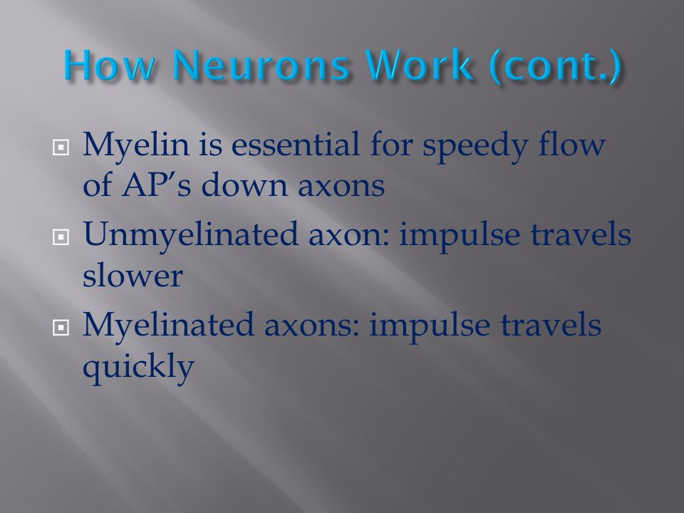  Myelin is essential for speedy flow of AP's down axons  Unmyelinated axon: impulse travels slower  Myelinated axons: impulse travels quickly