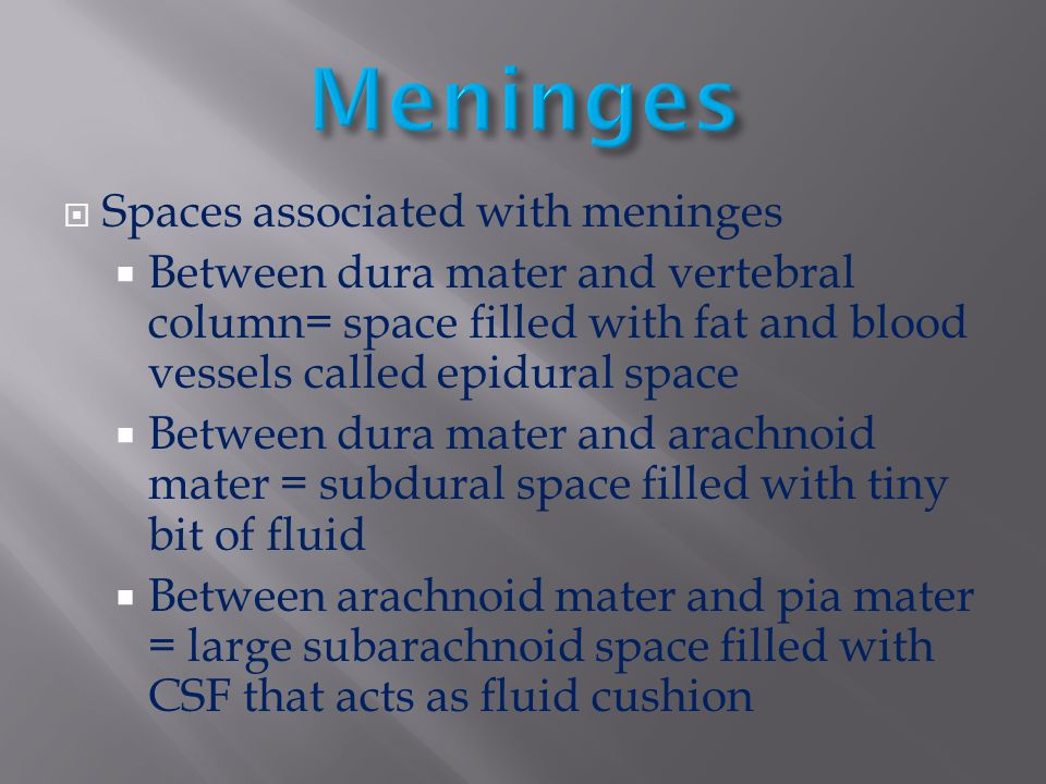  Spaces associated with meninges  Between dura mater and vertebral column= space filled with fat and blood vessels called epidural space  Between d