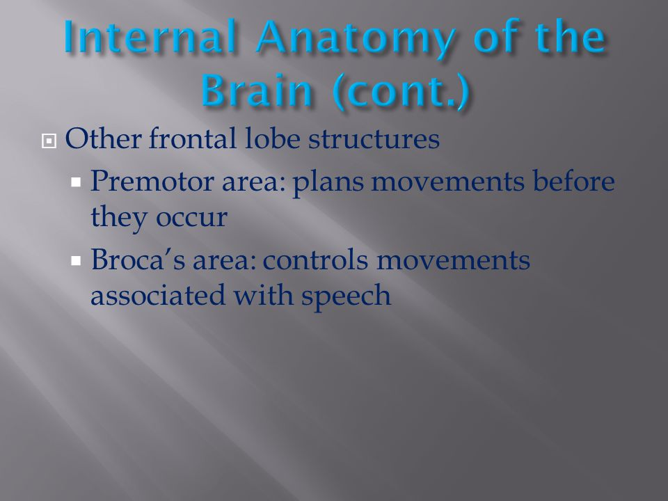  Other frontal lobe structures  Premotor area: plans movements before they occur  Broca's area: controls movements associated with speech