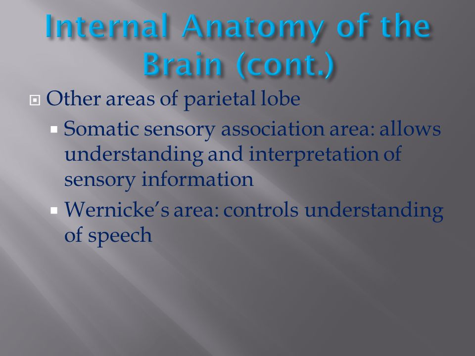  Other areas of parietal lobe  Somatic sensory association area: allows understanding and interpretation of sensory information  Wernicke's area: c