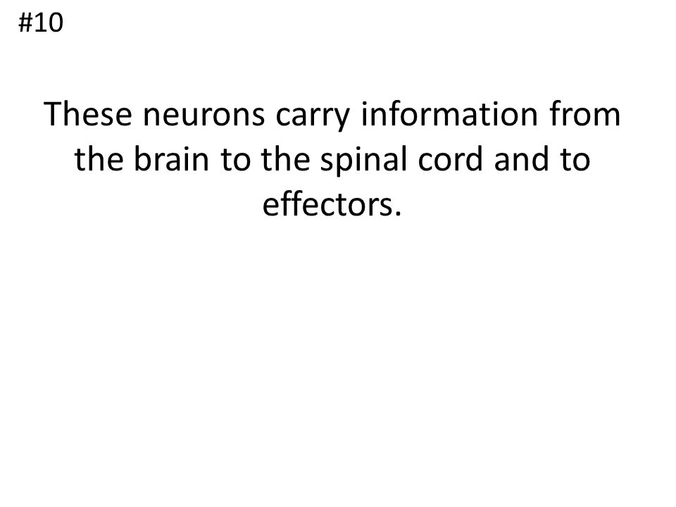 These neurons carry information from the brain to the spinal cord and to effectors. #10