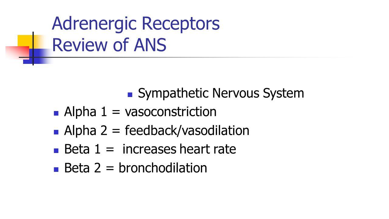 Adrenergic Receptors Review of ANS Sympathetic Nervous System Alpha 1 = vasoconstriction Alpha 2 = feedback/vasodilation Beta 1 = increases heart rate