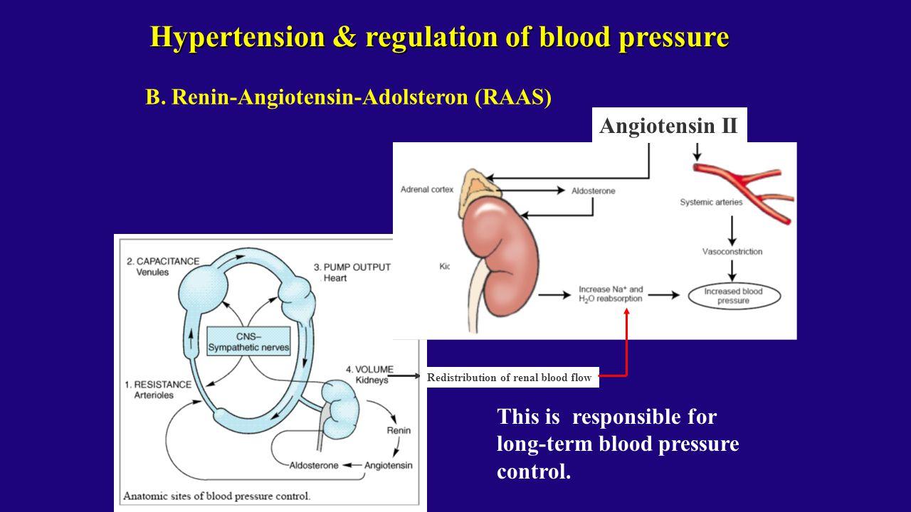Hypertension & regulation of blood pressure B. Renin-Angiotensin-Adolsteron (RAAS) This is responsible for long-term blood pressure control. Redistrib