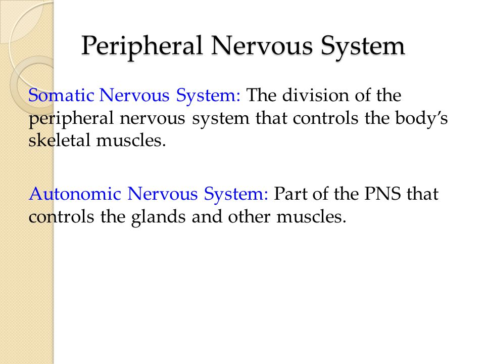 Peripheral Nervous System Somatic Nervous System: The division of the peripheral nervous system that controls the body's skeletal muscles.
