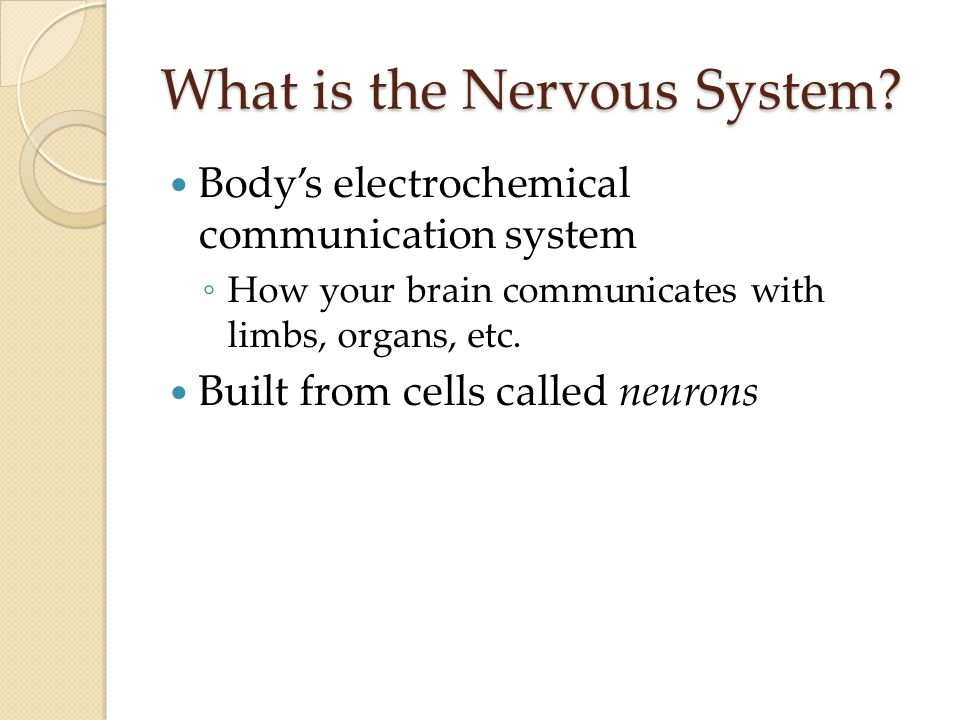 What is the Nervous System.