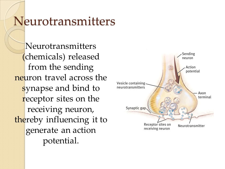 Neurotransmitters Neurotransmitters (chemicals) released from the sending neuron travel across the synapse and bind to receptor sites on the receiving neuron, thereby influencing it to generate an action potential.