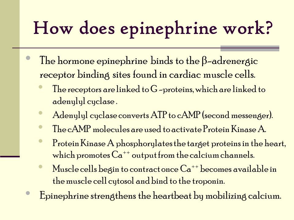 How does epinephrine work.
