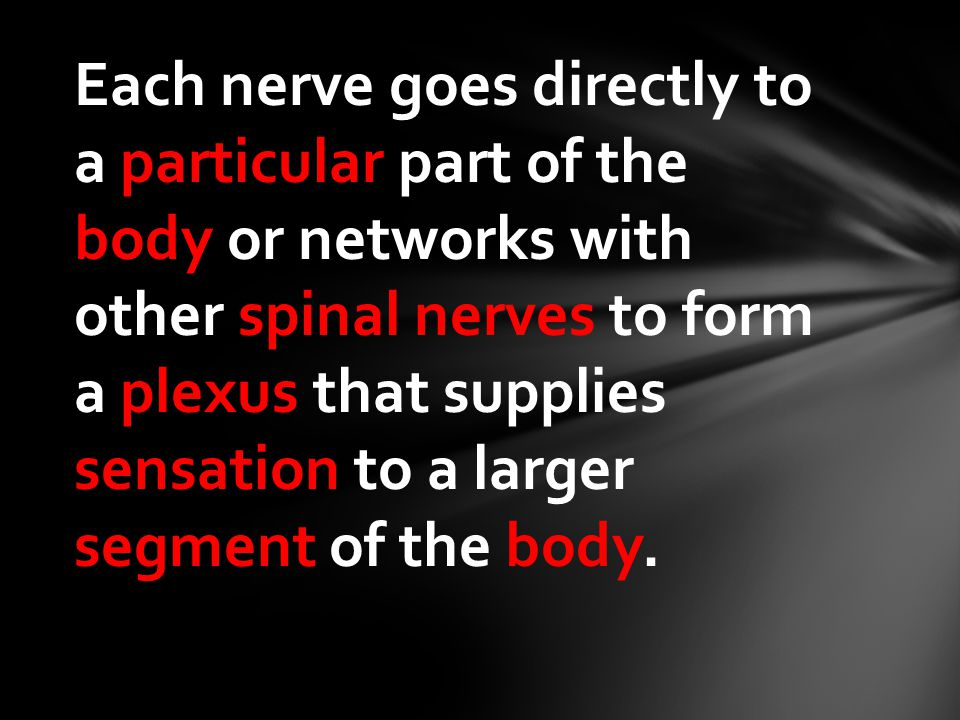 Each nerve goes directly to a particular part of the body or networks with other spinal nerves to form a plexus that supplies sensation to a larger se