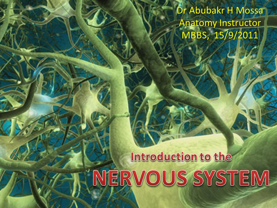 Topic outline: Divisions of nervous system: Anatomical (structural): Cellular components: – Neurons: parts and types – Neuroglia Central nervous system (CNS) – Brain and spinal cord – White and grey matter – Protection Peripheral nervous system (PNS) – Nerves and ganglia Functional: Somatic nervous system – Motor components – Sensory components Autonomic nervous system (ANS) – Sympathetic NS – Parasympathetic NS