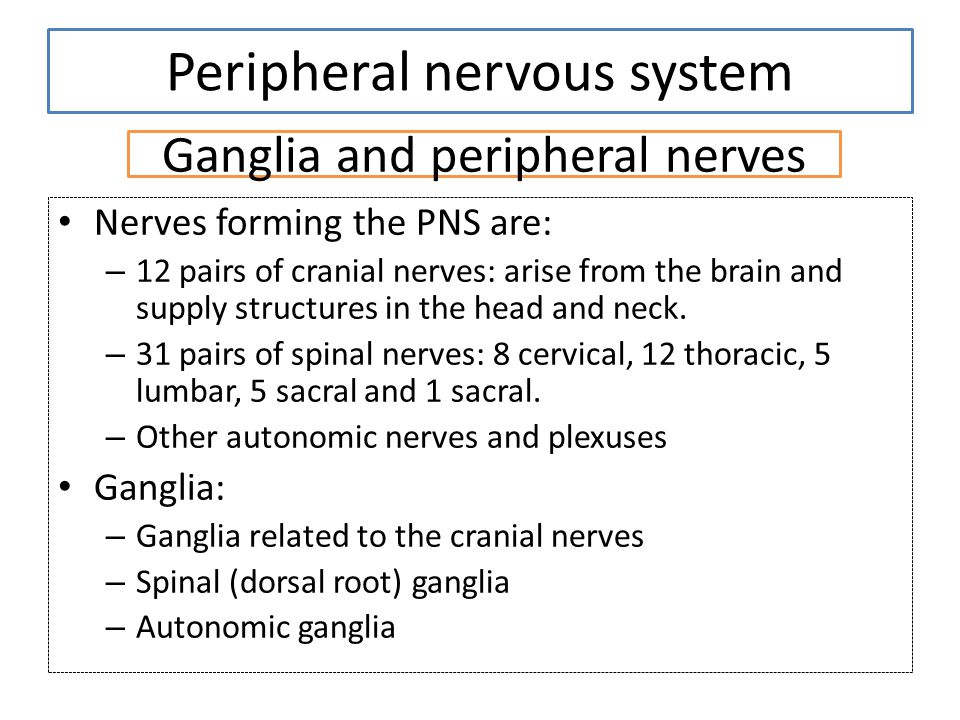 Ganglia and peripheral nerves Nerves forming the PNS are: – 12 pairs of cranial nerves: arise from the brain and supply structures in the head and nec