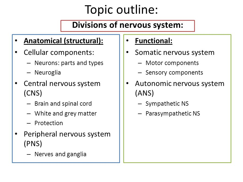 Topic outline: Divisions of nervous system: Anatomical (structural): Cellular components: – Neurons: parts and types – Neuroglia Central nervous syste
