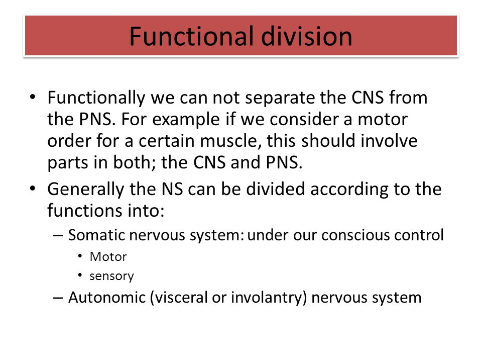 Functionally we can not separate the CNS from the PNS. For example if we consider a motor order for a certain muscle, this should involve parts in bot