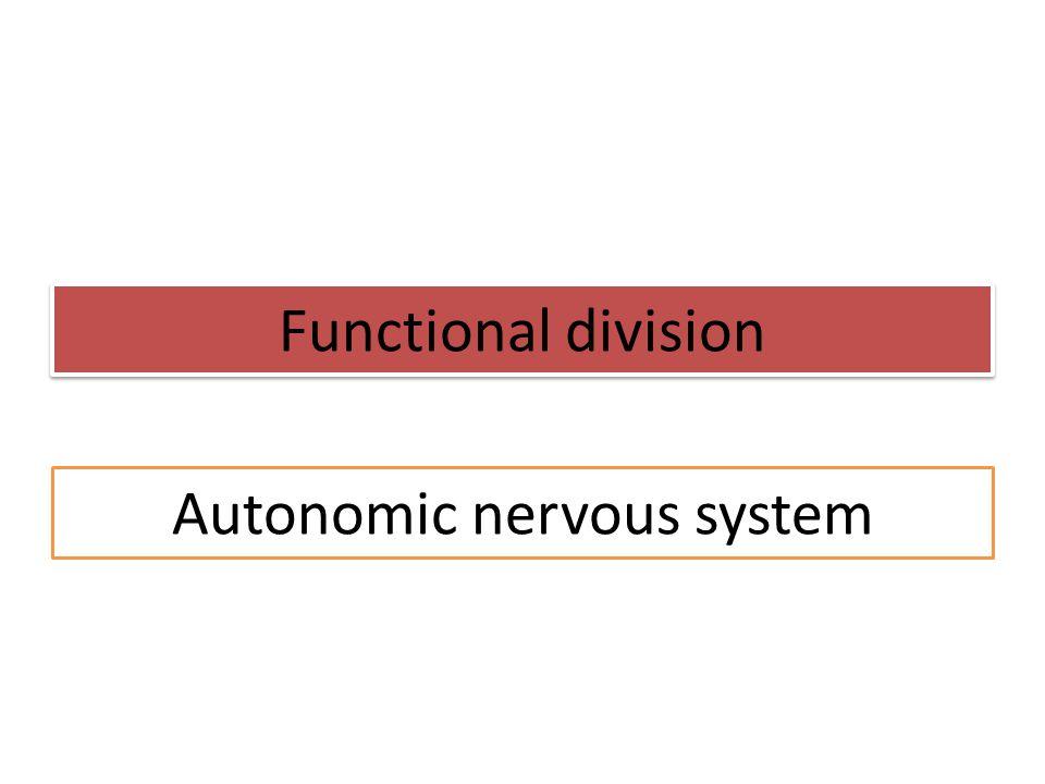 Functional division Autonomic nervous system