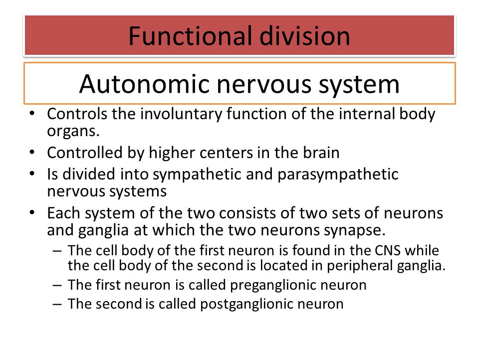 Controls the involuntary function of the internal body organs. Controlled by higher centers in the brain Is divided into sympathetic and parasympathet