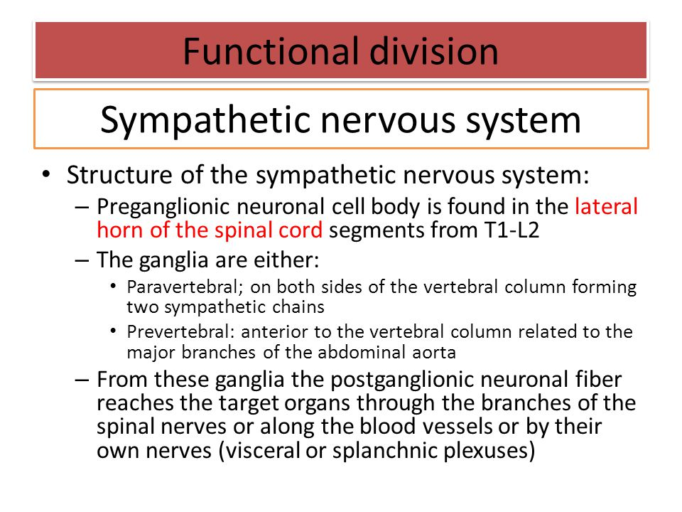 Structure of the sympathetic nervous system: – Preganglionic neuronal cell body is found in the lateral horn of the spinal cord segments from T1-L2 –