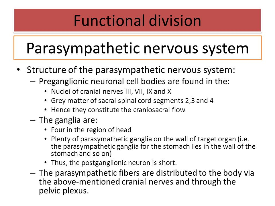 Structure of the parasympathetic nervous system: – Preganglionic neuronal cell bodies are found in the: Nuclei of cranial nerves III, VII, IX and X Gr