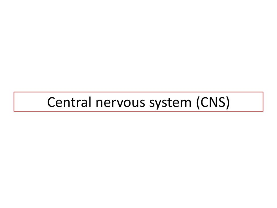 Central nervous system (CNS) Parts of nervous system protected by the skull and the vertebral column.