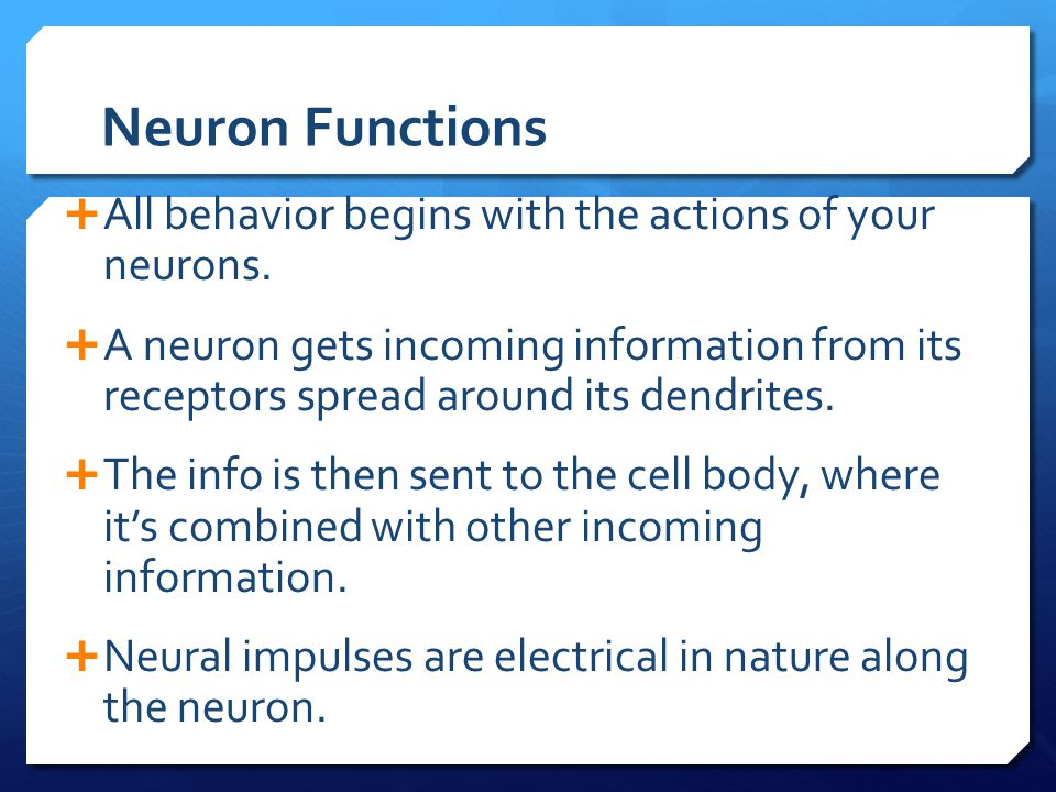 Neuron Functions  All behavior begins with the actions of your neurons.  A neuron gets incoming information from its receptors spread around its den