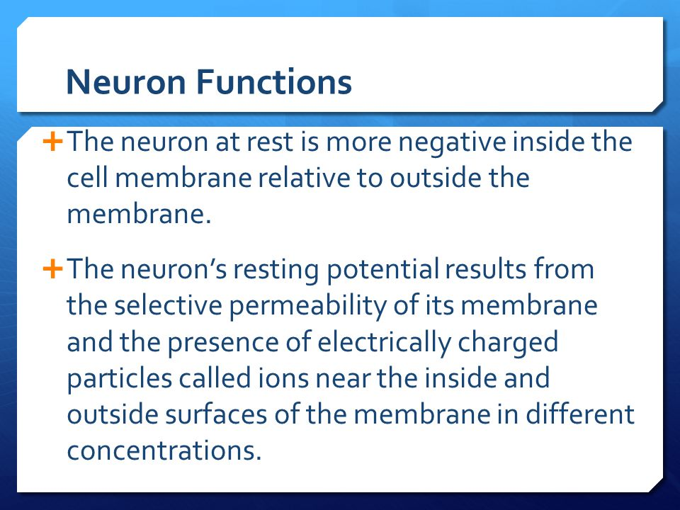 Neuron Functions  The neuron at rest is more negative inside the cell membrane relative to outside the membrane.  The neuron's resting potential res
