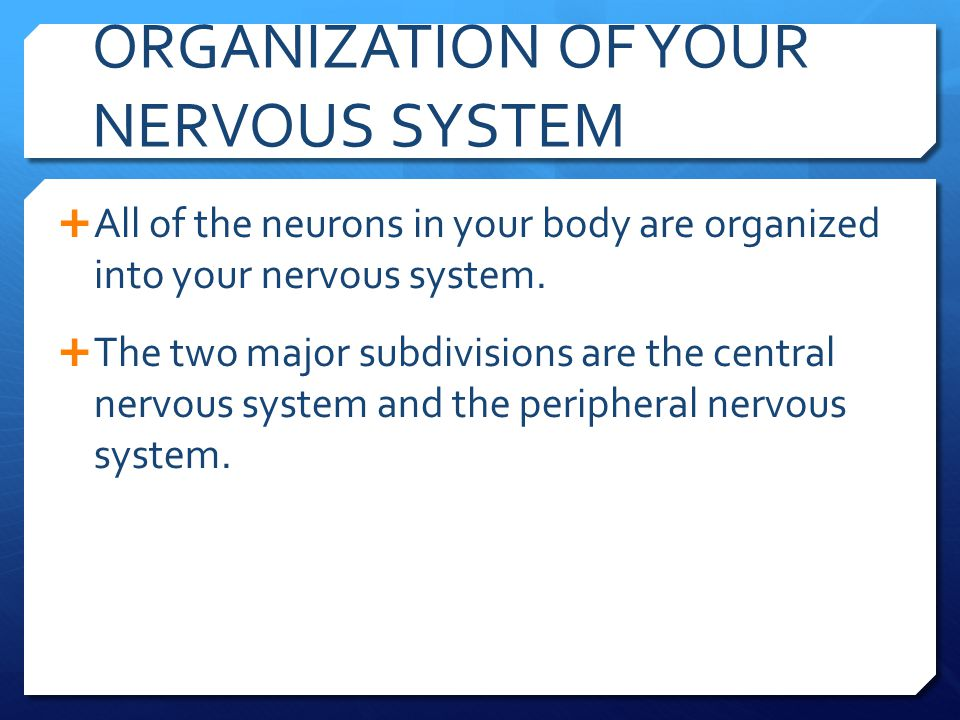 ORGANIZATION OF YOUR NERVOUS SYSTEM  All of the neurons in your body are organized into your nervous system.  The two major subdivisions are the cen