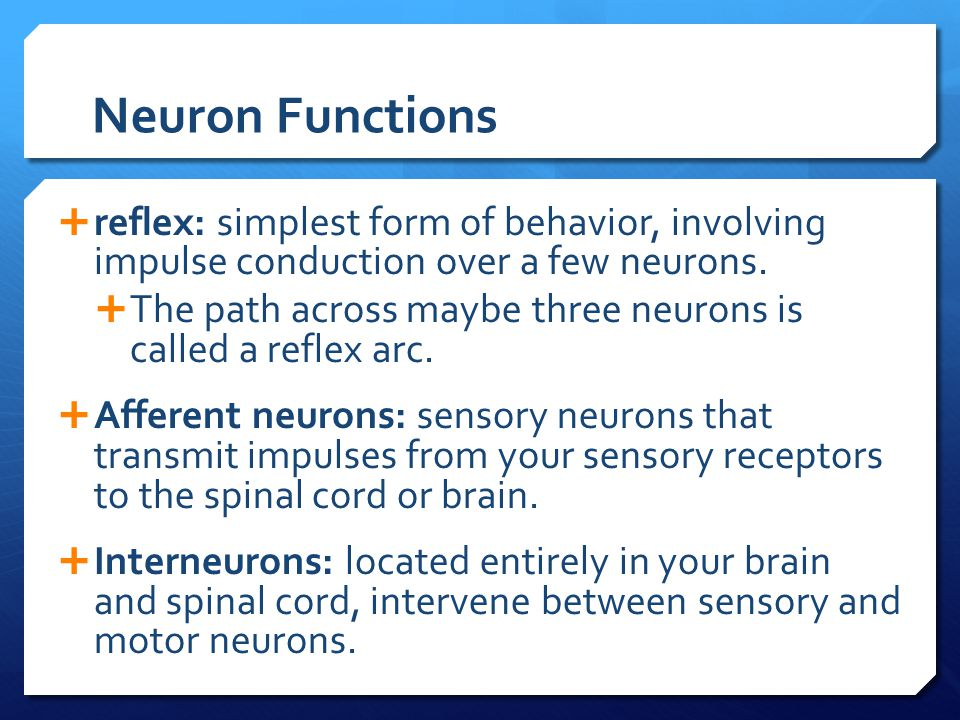 Neuron Functions  reflex: simplest form of behavior, involving impulse conduction over a few neurons.  The path across maybe three neurons is called