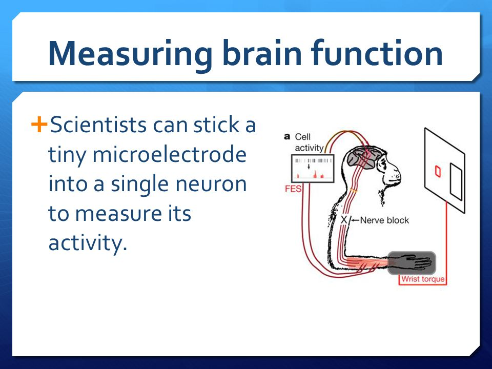 Measuring brain function  Scientists can stick a tiny microelectrode into a single neuron to measure its activity.