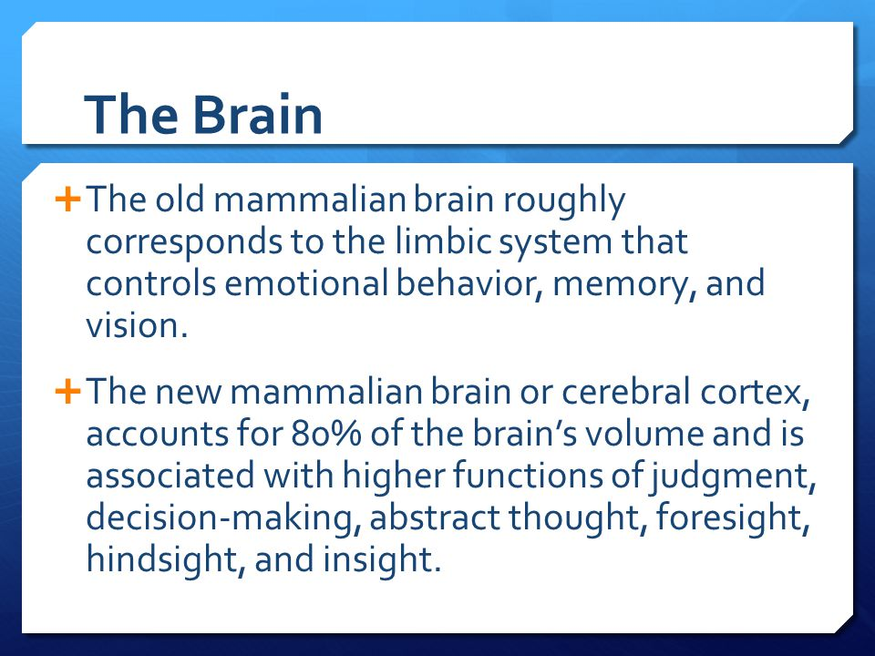 The Brain  The old mammalian brain roughly corresponds to the limbic system that controls emotional behavior, memory, and vision.  The new mammalian