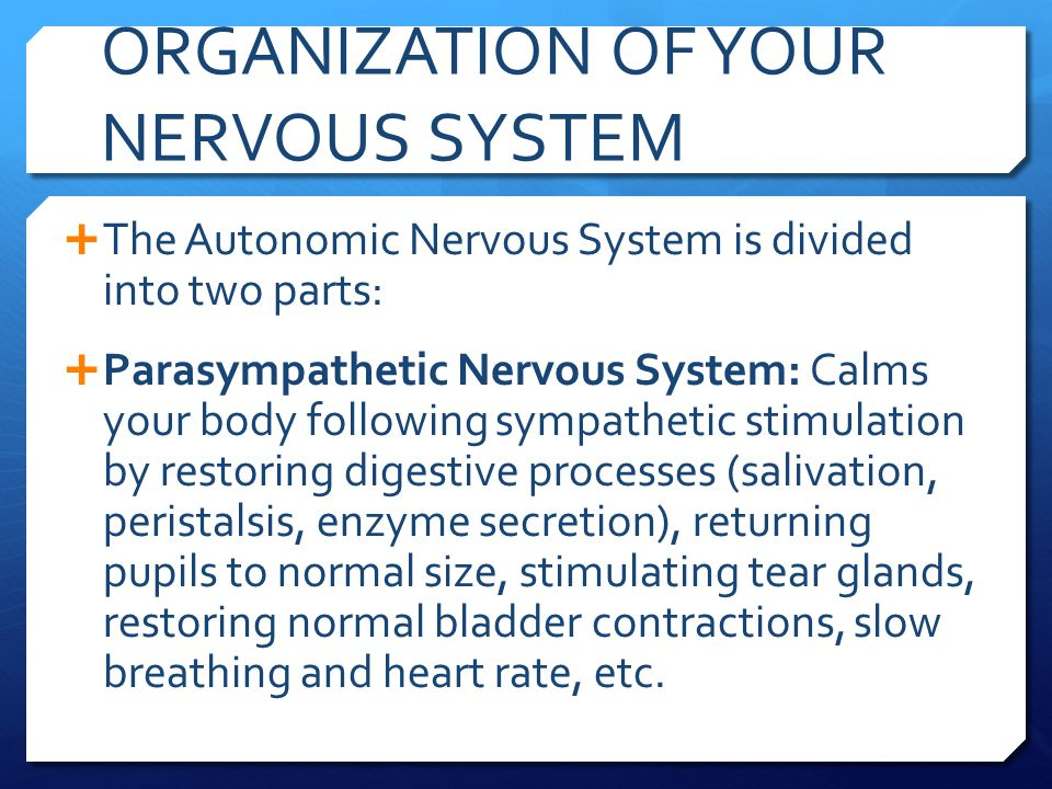 ORGANIZATION OF YOUR NERVOUS SYSTEM  The Autonomic Nervous System is divided into two parts:  Parasympathetic Nervous System: Calms your body follow