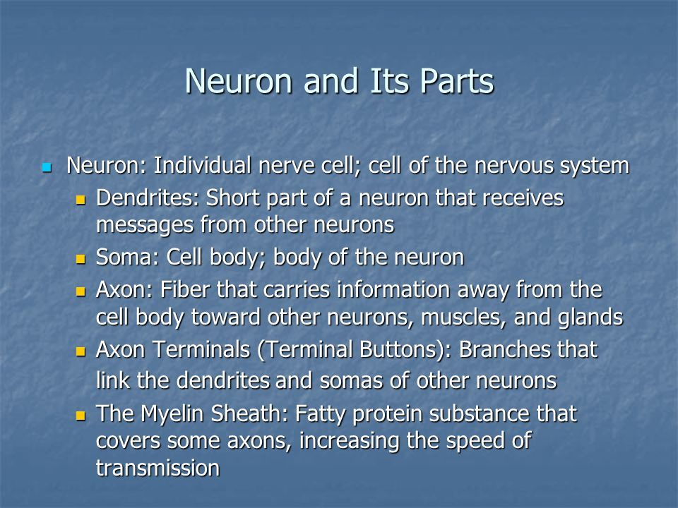 Neuron and Its Parts Neuron: Individual nerve cell; cell of the nervous system Neuron: Individual nerve cell; cell of the nervous system Dendrites: Short part of a neuron that receives messages from other neurons Dendrites: Short part of a neuron that receives messages from other neurons Soma: Cell body; body of the neuron Soma: Cell body; body of the neuron Axon: Fiber that carries information away from the cell body toward other neurons, muscles, and glands Axon: Fiber that carries information away from the cell body toward other neurons, muscles, and glands Axon Terminals (Terminal Buttons): Branches that link the dendrites and somas of other neurons Axon Terminals (Terminal Buttons): Branches that link the dendrites and somas of other neurons The Myelin Sheath: Fatty protein substance that covers some axons, increasing the speed of transmission The Myelin Sheath: Fatty protein substance that covers some axons, increasing the speed of transmission
