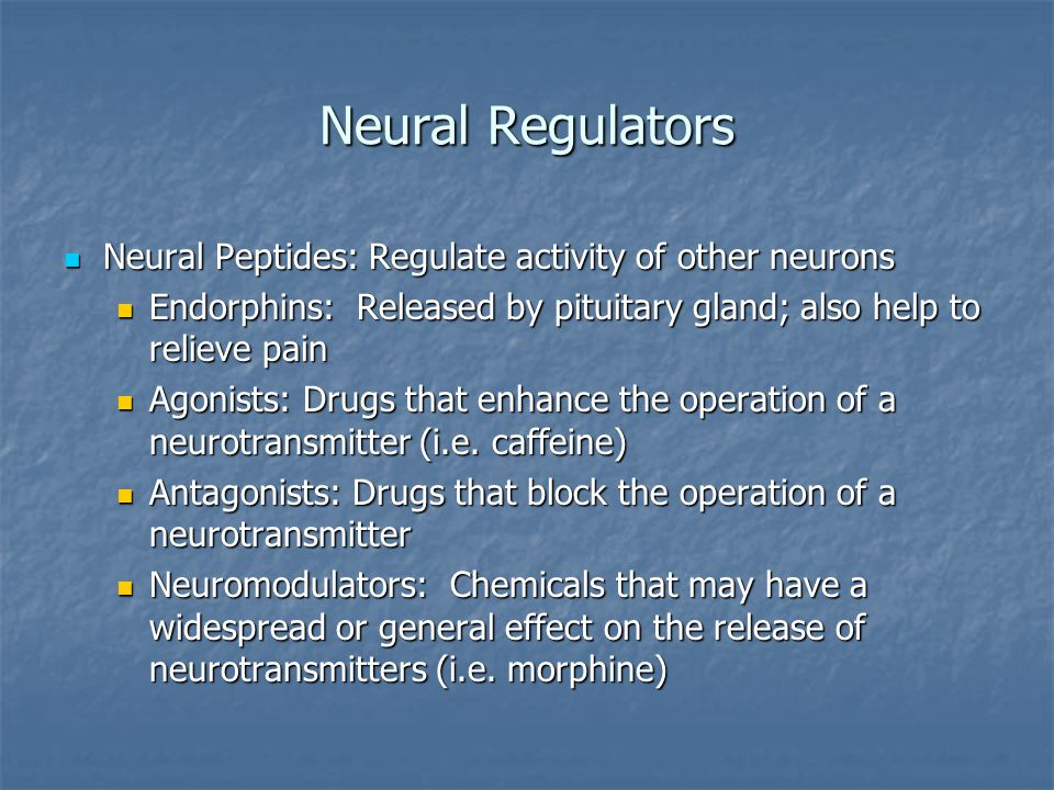 Neural Regulators Neural Peptides: Regulate activity of other neurons Neural Peptides: Regulate activity of other neurons Endorphins: Released by pituitary gland; also help to relieve pain Endorphins: Released by pituitary gland; also help to relieve pain Agonists: Drugs that enhance the operation of a neurotransmitter (i.e.
